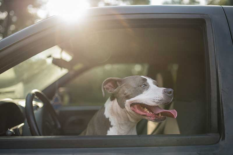 Mata samochodowa dla psa